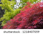 view on a side of deep red...   Shutterstock . vector #1218407059