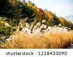 beautiful autumn reeds  scenery ...   Shutterstock . vector #1218433090