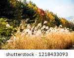 beautiful autumn reeds  scenery ...   Shutterstock . vector #1218433093