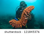 Scuba diver holding up a sea cucumber (Holothuroidea) [MR]