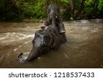 young asian elephant playing... | Shutterstock . vector #1218537433
