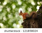 squirrel on a tree on a green... | Shutterstock . vector #121858024
