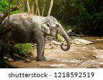 elephants relaxing and enjoying ... | Shutterstock . vector #1218592519