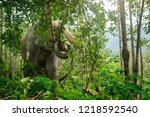 elephants pulling down vine by... | Shutterstock . vector #1218592540