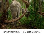 elephants enjoy living in the... | Shutterstock . vector #1218592543