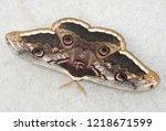 saturnia pyri  the giant...   Shutterstock . vector #1218671599