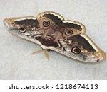 saturnia pyri  the giant...   Shutterstock . vector #1218674113