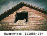 A Cat In A Farm