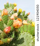 Prickly Pear Plant  Cactus  In...