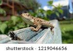 just small lizard  | Shutterstock . vector #1219046656