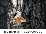 maple leaf on barbed wire... | Shutterstock . vector #1219090396