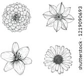 flower sketch illustration | Shutterstock .eps vector #1219090693