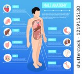male anatomy isometric poster... | Shutterstock .eps vector #1219155130