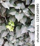 green leaves background | Shutterstock . vector #1219168990