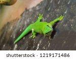 green wall lizard in natural... | Shutterstock . vector #1219171486