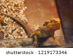 lizard in natural habitat.... | Shutterstock . vector #1219173346