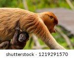 wild mother and baby proboscis... | Shutterstock . vector #1219291570