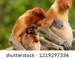 wild mother and baby proboscis... | Shutterstock . vector #1219297336