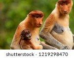 wild mother and baby proboscis... | Shutterstock . vector #1219298470
