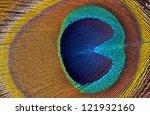 Macro Image Of Peaock Feathers