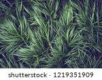 creative layout made of green...   Shutterstock . vector #1219351909