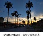 palms in brasil | Shutterstock . vector #1219405816