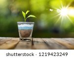 plant growing on glass of... | Shutterstock . vector #1219423249