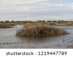Wetland At Yolo Bypass Wildlife ...