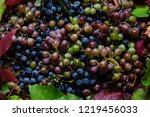 lots of juicy ripe rural grapes ... | Shutterstock . vector #1219456033