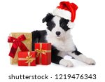 Stock photo border collie puppy with santa claus hat and christmas gifts idolated on white background 1219476343