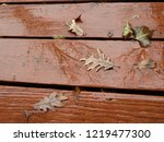 Dried Autumn Oak Leaves On Wet...