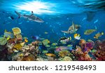 Underwater Paradise Background...