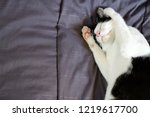 sleeping cat with two paw cover ... | Shutterstock . vector #1219617700