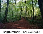 beautiful beech forest in... | Shutterstock . vector #1219630930