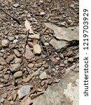 small native australian lizard... | Shutterstock . vector #1219703929