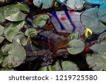 Pond Full Of Water Lilies With...