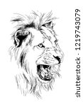 Lion Drawn With Ink From The...