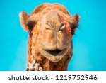 Smiling Camel. Head And Mouth...