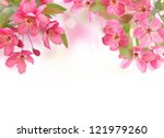 Stock photo apple flowers spring blossom on white with copy space 121979260