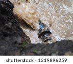 poly pipe or hdpe pipe leaking | Shutterstock . vector #1219896259