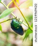 jewel beetle on the leaf tree... | Shutterstock . vector #1219969420