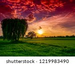 weeping willow in the sunset | Shutterstock . vector #1219983490