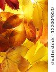 Bright Autumn Leaves  Close Up