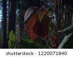 forest in the sun entwined with ... | Shutterstock . vector #1220071840