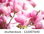 Small photo of pink magnolia flower on white background