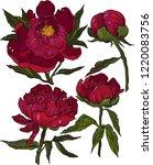 burgundy peony set  vector... | Shutterstock .eps vector #1220083756