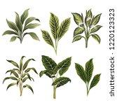tropical vintage plants floral... | Shutterstock .eps vector #1220123323