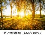 golden autumn scene in a park ... | Shutterstock . vector #1220310913