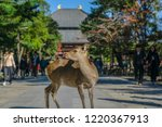 the sika deer freely roaming... | Shutterstock . vector #1220367913