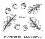 oak leaf drawing illustration... | Shutterstock .eps vector #1220380930